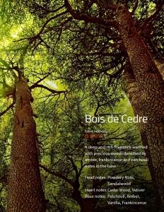 Bois de Cedre Aromaöl 200 ml