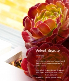 Velvet Beauty  Duftmarketing Aromaöl 200 ml